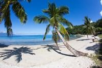 Beach, Waitatavi Bay in Vanua Levu, Fiji Fine Art Print