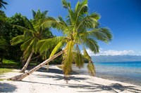 Beach & Palms, Waitatavi Bay, Fiji Fine Art Print