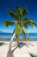 Beach, Waitatavi Bay, Vanua Levu, Fiji Fine Art Print