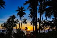 Sunset and Palms, Taveuni, Fiji Fine Art Print