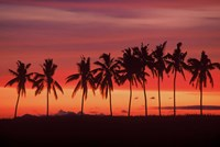Palm Trees and Sunset, Queens Road, Fiji Fine Art Print
