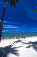 Palm Trees and Horses, Tambua Sands, Coral Coast, Fiji Fine Art Print