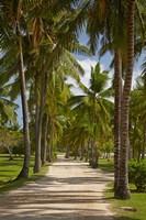 Avenue of Palms, Musket Cove Island Resort, Malolo Lailai Island, Mamanuca Islands, Fiji Fine Art Print
