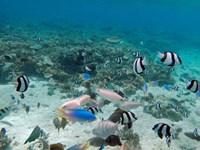 Tropical Fish, Malolo Lailai Island, Fiji Fine Art Print