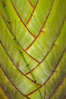 Palm flora, Coral Coast, Viti Levu, Fiji Fine Art Print