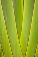 Palm frond pattern, Coral Coast, Viti Levu, Fiji Fine Art Print