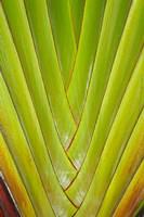 Palm frond pattern, Coral Coast,  Fiji Fine Art Print