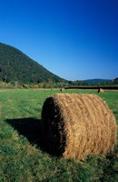 Hay Bales in Litchfield Hills, Connecticut Fine Art Print