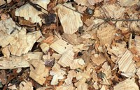 Wood Chips on a TPL Property, Goshen, Connecticut Fine Art Print