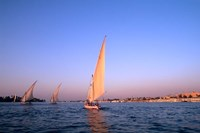 Beautiful Sailboats Riding Along the Nile River, Cairo, Egypt Fine Art Print