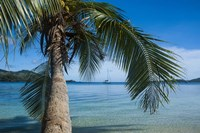 Palm tree over clear waters around Nanuya Lailai Island, Blue Lagoon, Yasawa, Fiji, South Pacific Fine Art Print