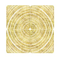 Tree Ring Triptych II Fine Art Print