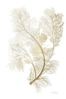Fern Algae Gold on White 2 Fine Art Print
