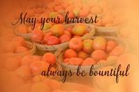 Harvest Wish Fine Art Print