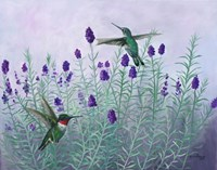 Humming Lavender Fine Art Print