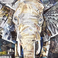 Elephants Gaze Fine Art Print