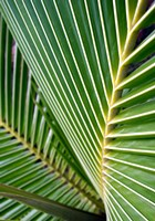 Tropical Close Up Fine Art Print