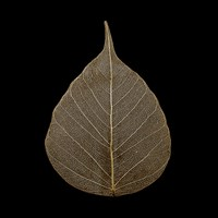 Brown Leaf Fine Art Print