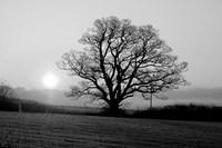 Tree On Fields Fine Art Print