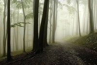 Road Through The Woods Fine Art Print
