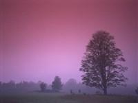 Evening Fields Fine Art Print