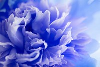 Blue Flower Fine Art Print