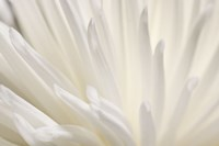 White Flower Fine Art Print