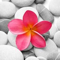 Zen Flower Fine Art Print