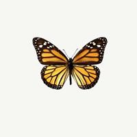 Yellow Butterfly 1 Fine Art Print