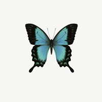 Blue Butterfly Fine Art Print