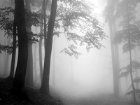 Woods 1 Fine Art Print