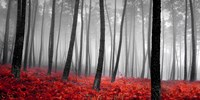 Autumn Woods 2 Fine Art Print