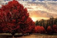 Crimson Trees Fine Art Print