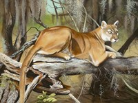 Florida Panther Fine Art Print