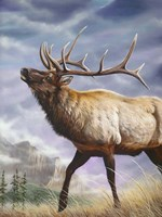 High Country Fine Art Print