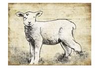 Vintage Lamb Sketch Fine Art Print