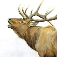 Majestic Elk Brown Crop Fine Art Print