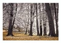 Autumn Trees And Leaves Fine Art Print