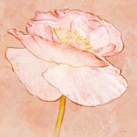 Sweet Peach Poppy I Fine Art Print