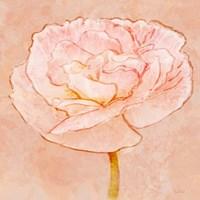 Sweet Peach Poppy II Fine Art Print