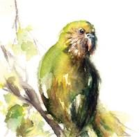 Lime Fine Art Print