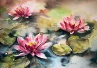 Lily Pads Fine Art Print