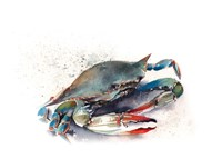 Crab II Fine Art Print
