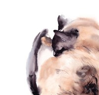 Sleepy Siamese Fine Art Print