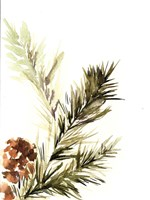 Pine Leaves Fine Art Print