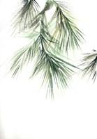 Pine Leaves II Fine Art Print