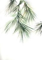 Pine Leaves II Fine Art Print