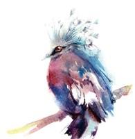 Ruffled Feathers II Fine Art Print