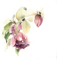 Rosebud Fine Art Print