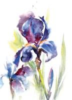 Iris IV Fine Art Print